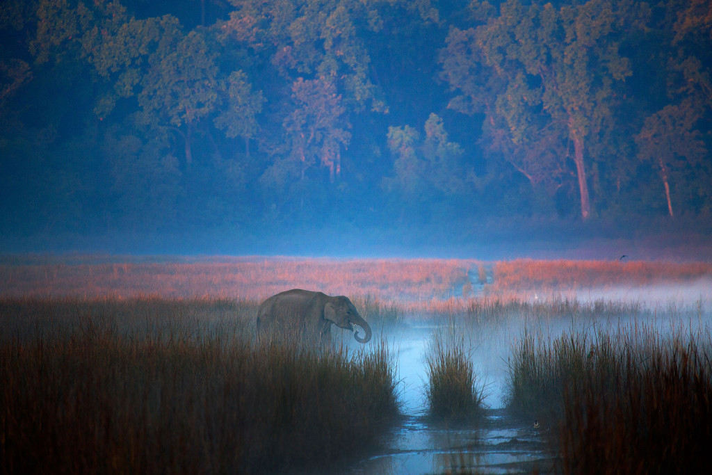 Elephant in mist in Corbett, India